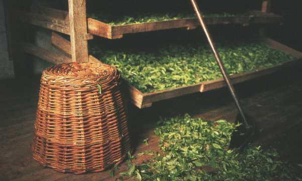 При производстве зеленого чая основная цель - исключить развитие...